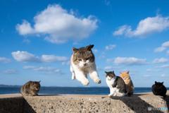 飛行隊のネコさん(4)
