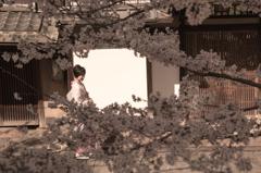 そぞろ歩き-京都、東山の街-