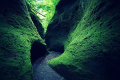苔の回廊①