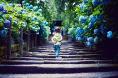 明月院Blue