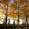 昭和記念公園2011(秋)27