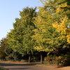 昭和記念公園2011(秋)29