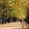 昭和記念公園2011(秋)28