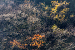枯れ木の賑わい