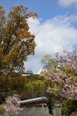 松山城の春