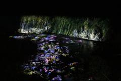 川面に映る四季の花