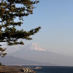 三保の松原より富士を観る