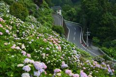 斜面に咲く梅雨色