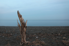 師走の浜に佇む