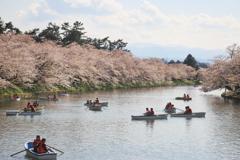 弘前で見た桜並木
