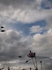 この空は君へと繋がっていると信じてる