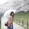 傘とさくら