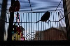 快適な鳥かごの世界..