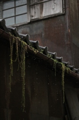 2011-11-11雨