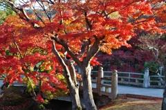 奈良公園-紅葉