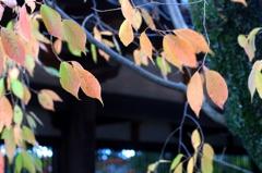 古刹-広葉樹
