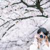 桜が咲かなかったら、春なんて嫌いになっていたかもしれない。