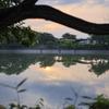 朝の湖畔 五料沼
