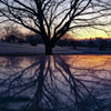 冬の彩、大室公園、