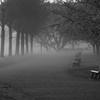 霧に包まれて、