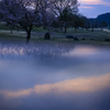 桜咲く青い朝、