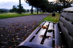 大室公園 朝のベンチ