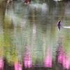 彩ずく湖畔