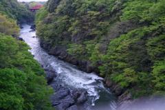 渡良瀬川散歩、