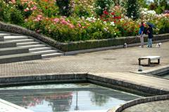 フラワーパーク バラ園