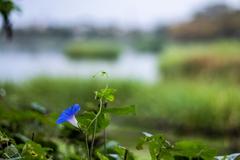 波志江湖畔-3