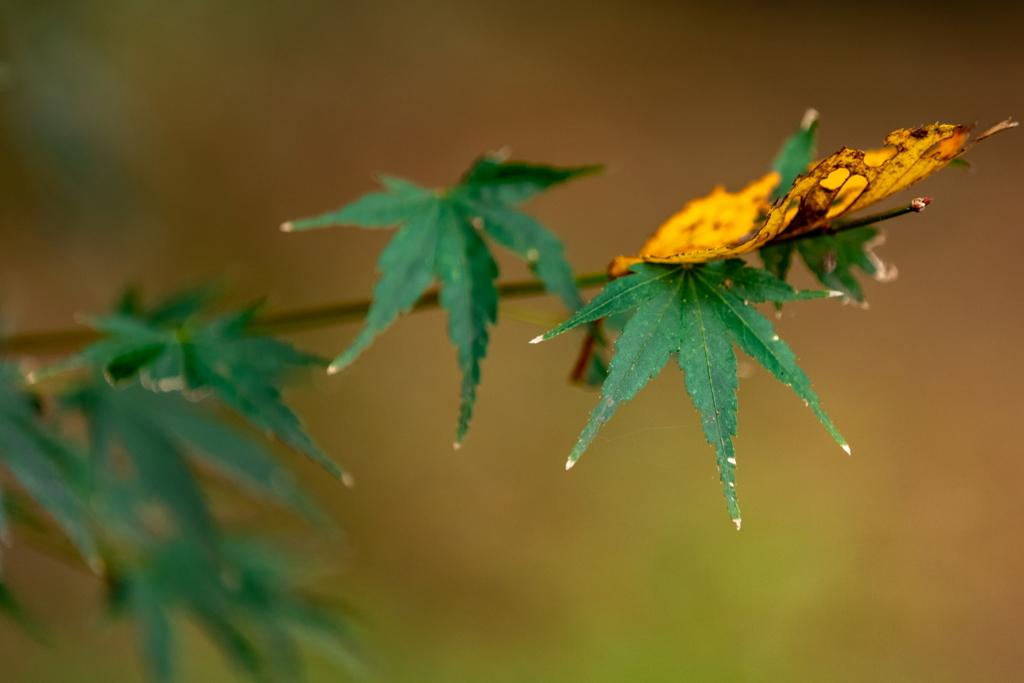 舞い降りる秋