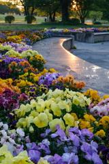 輝く花園 大室公園