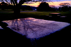 公園散歩(夜明け)