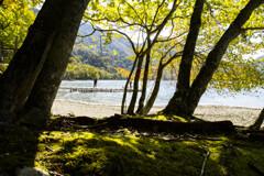 木漏れ日の湖畔、