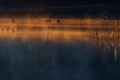 目覚める湖畔、