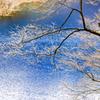 早春の四万湖、