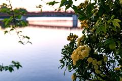 波志江の春