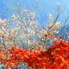 桜山公園 レツド ホワイト ブルー