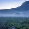 霧の湿原 Ⅱ