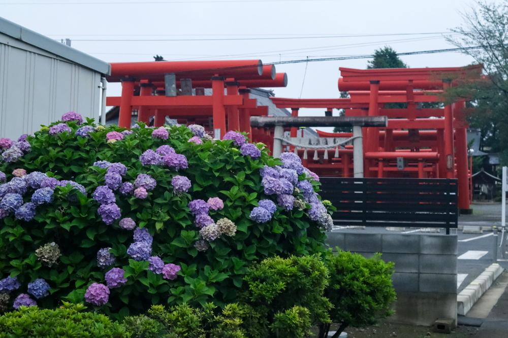 小泉稲荷 雨 Ⅱ