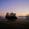 朝の広場、