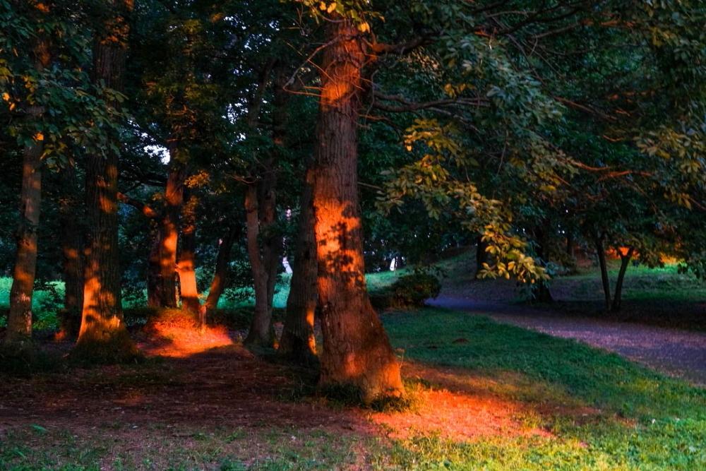 朝焼けの森