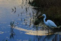 湖畔の朝、霞ケ浦、