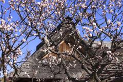春の館、足利市