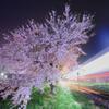 桜に魅せられた夜