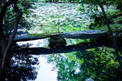 天授庵・池の庭園にて Ⅱ