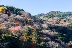 晩秋の嵐山 Ⅱ