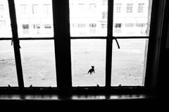 旧明倫小学校の窓 ③