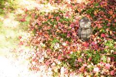 晩秋の圓光寺で Ⅱ
