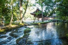 夏の上賀茂神社にて。